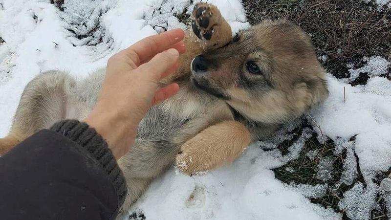 Namka (ex Loufka) - femelle - refuge de Târgu Frumos - réservée adoption Loufka13