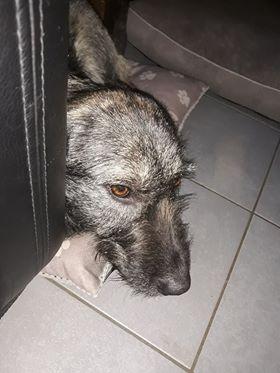 Lula - femelle - Refuge de Târgu Frumos  - Adoption par Nicolas dept 67 Lula_410