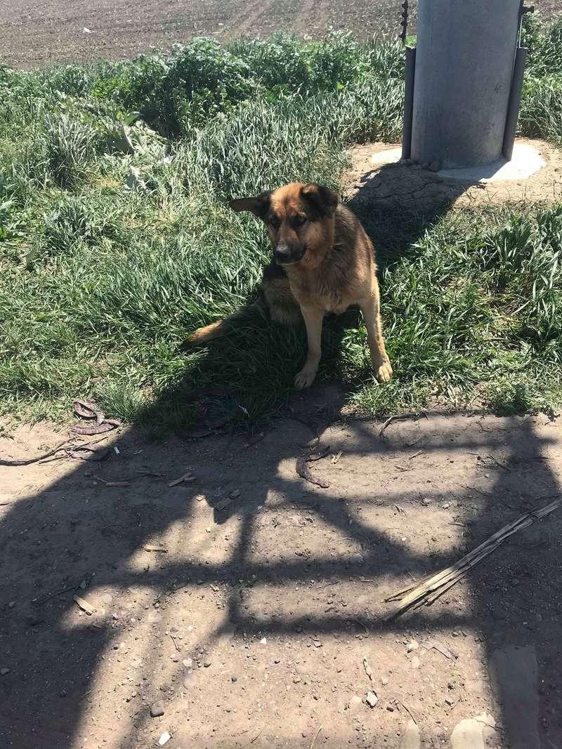 Lunky - mâle -  fourrière de Târgu Frumos - frais d'adoption réduits Lunky_16