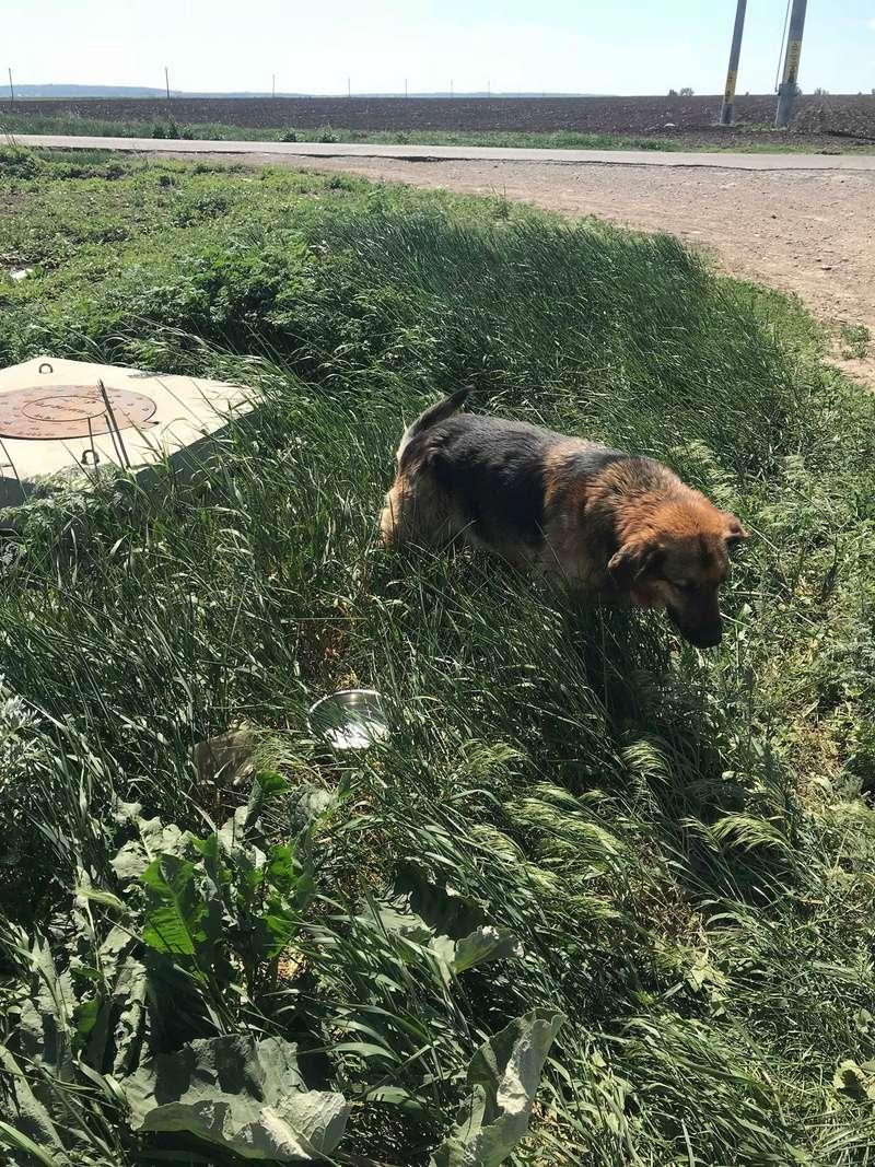 Lunky - mâle -  fourrière de Târgu Frumos - frais d'adoption réduits Lunky_18