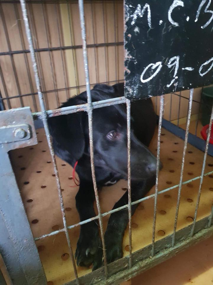 Max - mâle - refuge de Târgu Frumos - réservé adoption en Hollande Max_110