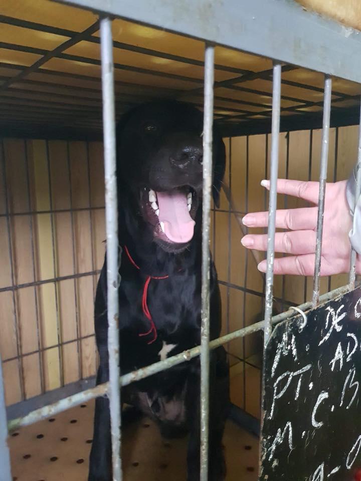 Max - mâle - refuge de Târgu Frumos - réservé adoption en Hollande Max_210