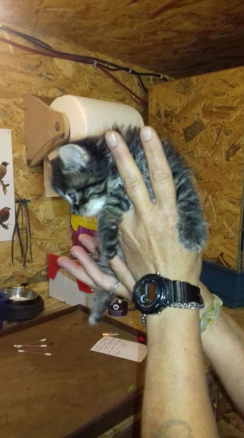 Opale (ex Maye) - femelle - en FA en Alsace (67) - réservée adoption (88) Maye_310