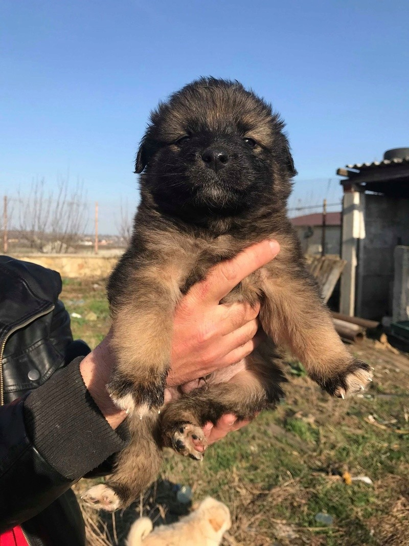 Ace (ex-Milano) - mâle - chez Andreea (Târgu Frumos) - réservée adoption (67) Milano10