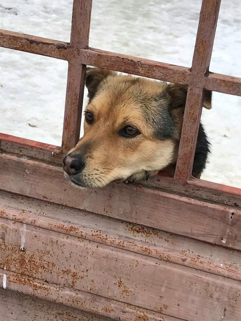 Milena - femelle - chez Andreea (Târgu Frumos) - adoptée via Andreea Milena19