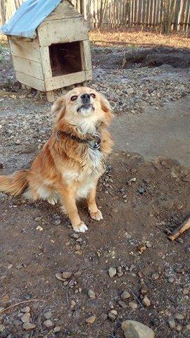 Misty - femelle - refuge de Târgu Frumos - réservée adoption 67 Misty_16