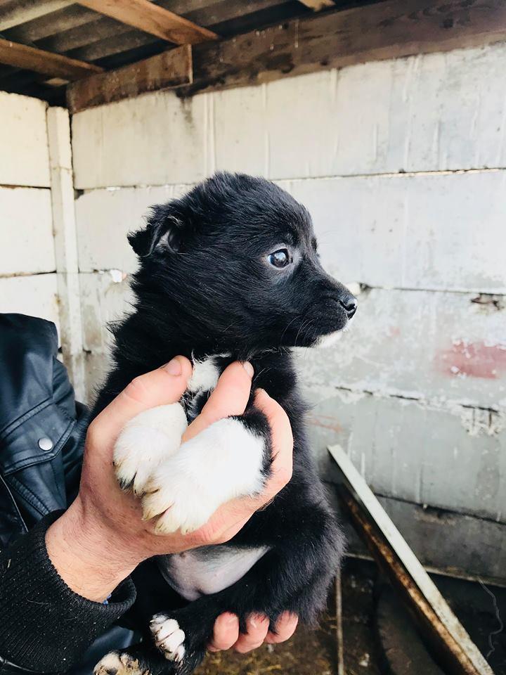 Ness (ex-Nestle) - femelle - chez Andreea (Târgu Frumos) adopter (68) Nestle14