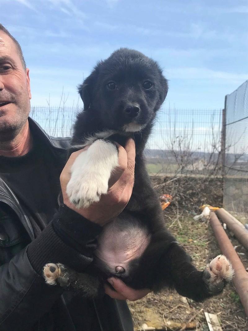 Ness (ex-Nestle) - femelle - chez Andreea (Târgu Frumos) adopter (68) Nestle16