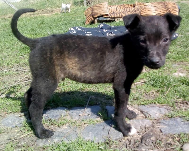 Cooky (ex-Newton) - mâle - Târgu Frumos - réservé adoption (67) Newton12