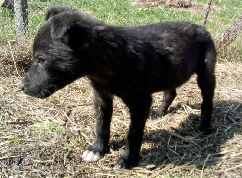Cooky (ex-Newton) - mâle - Târgu Frumos - réservé adoption (67) Newton14