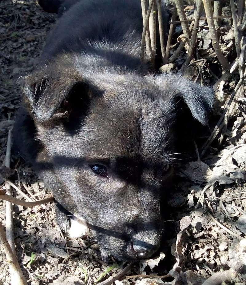 Cooky (ex-Newton) - mâle - Târgu Frumos - réservé adoption (67) Newton15