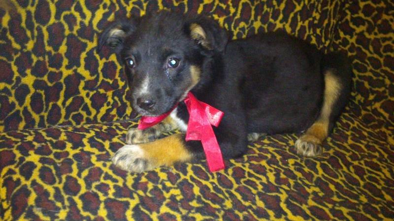 Nookie - femelle  - refuge de Târgu Frumos - Réservée adoption (67) Nookie10