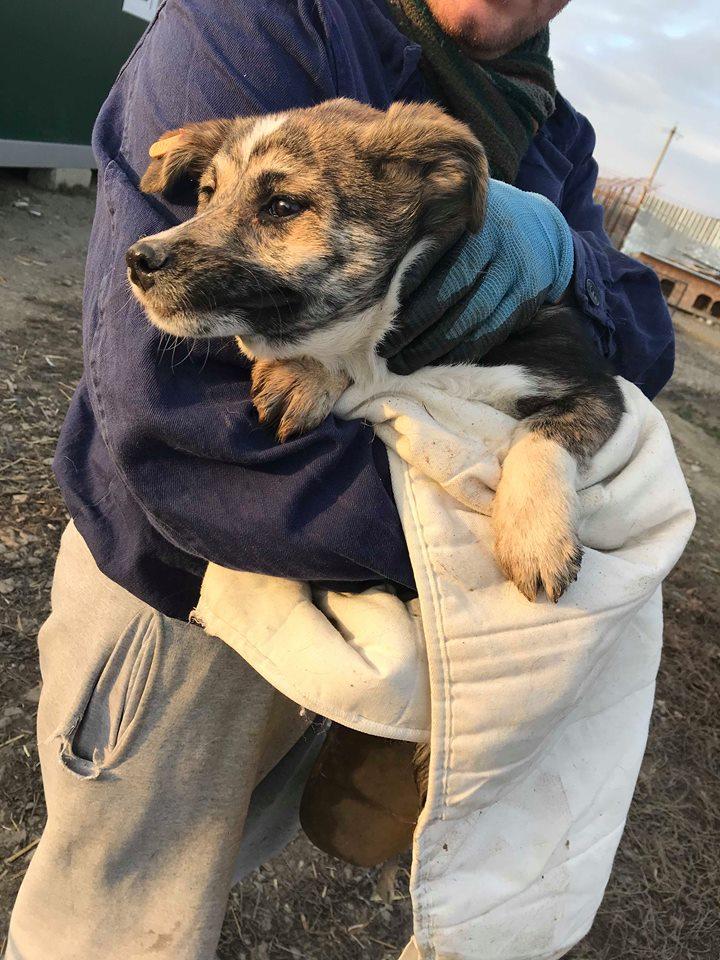 Nutela - chienne femelle - refuge de Târgu Frumos - en famille d'accueil dans le 68 Nutela11