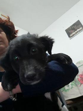 Mia (ex-Petro) - femelle - refuge de Târgu Frumos - adoptée par sa FA (dept 67) Petro_10