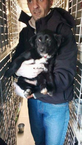 Mia (ex-Petro) - femelle - refuge de Târgu Frumos - adoptée par sa FA (dept 67) Petro_14