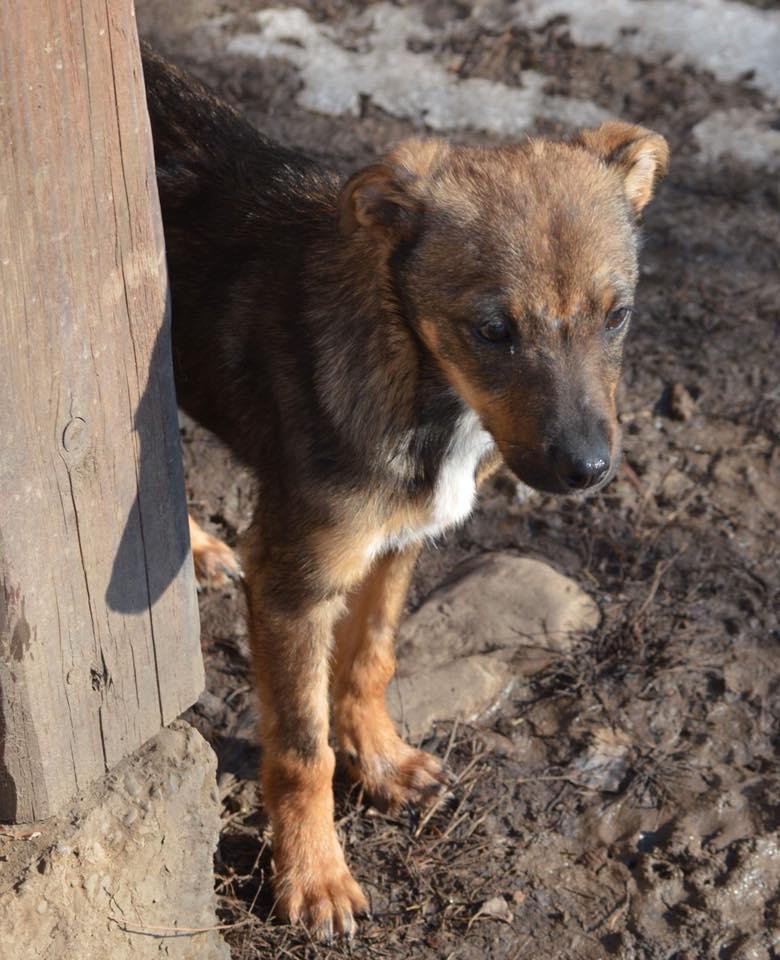 Picolo - mâle - refuge de Târgu Frumos - adopté via Andreea Picolo12