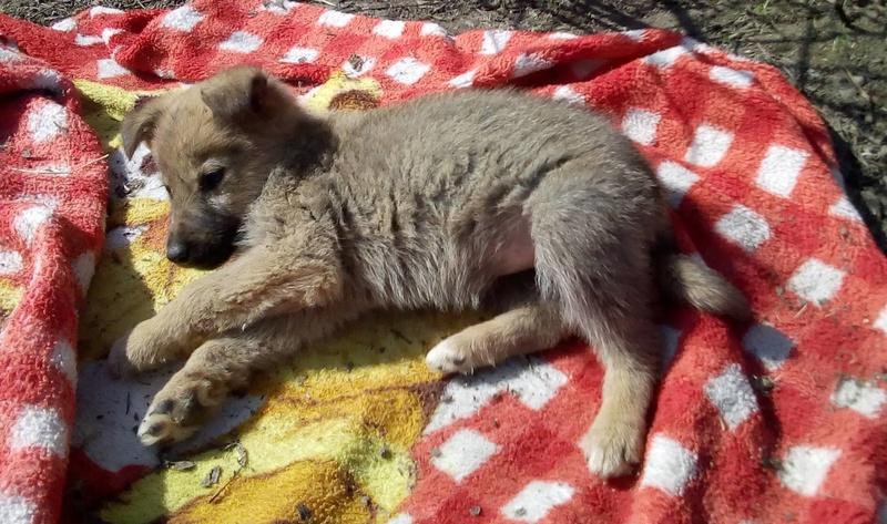 Tsuna (ex-Polina) - femelle - Târgu Frumos - réservée Adoption (93) Polina11