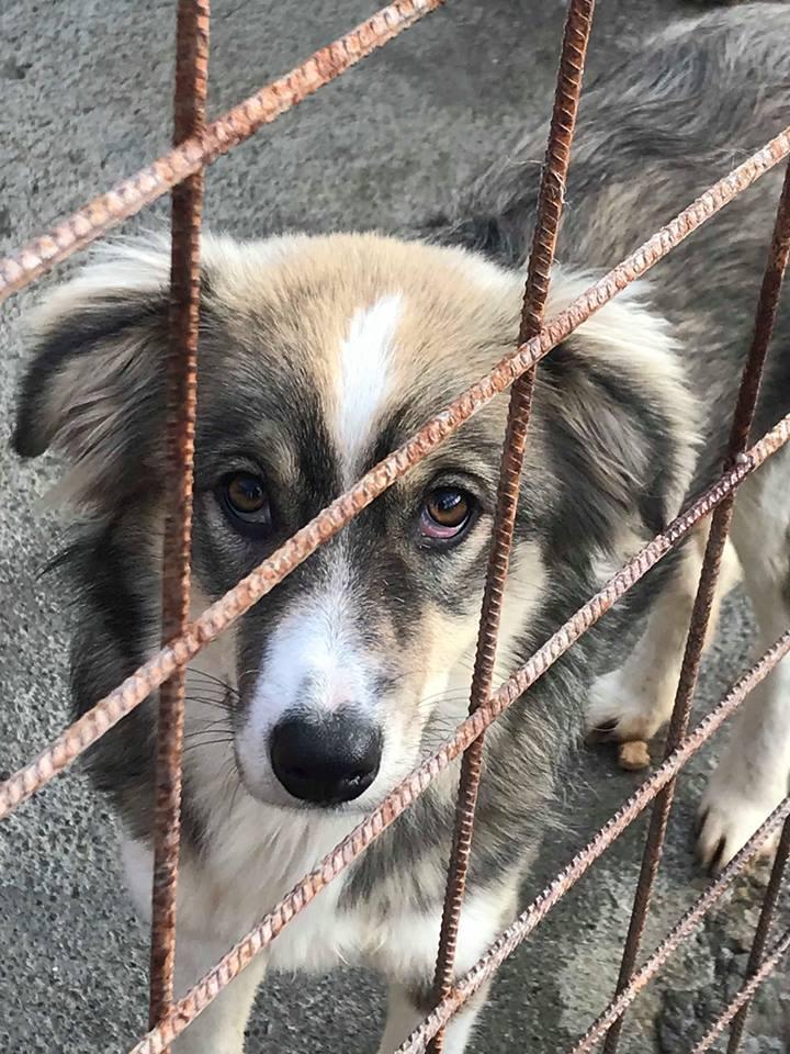 Prisca - femelle - refuge de Târgu Frumos -adoptée Prisca10