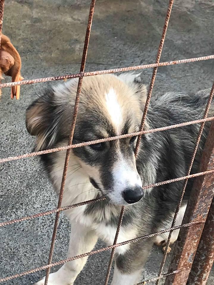 Prisca - femelle - refuge de Târgu Frumos -adoptée Prisca13