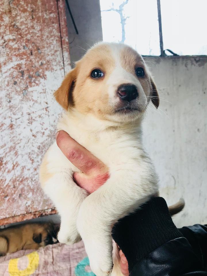 Nala (ex-Rosa) - femelle - chez Andreea (Târgu Frumos) - réservée adoption (67) Rosa_410