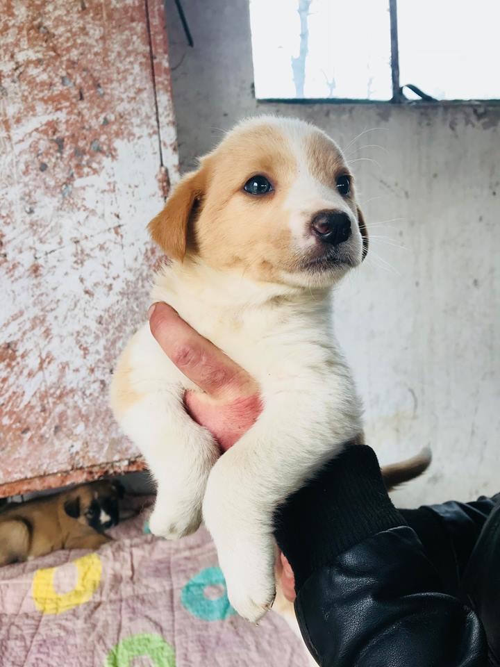Nala (ex-Rosa) - femelle - chez Andreea (Târgu Frumos) - réservée adoption (67) Rosa_610