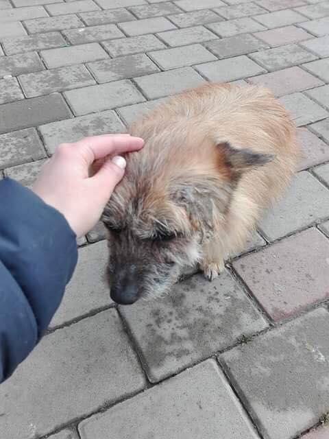 Scruffy - mâle - Adopté (75) Scruff13