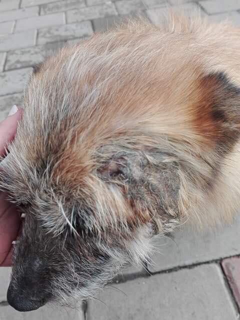 Scruffy - mâle - Adopté (75) Scruff15