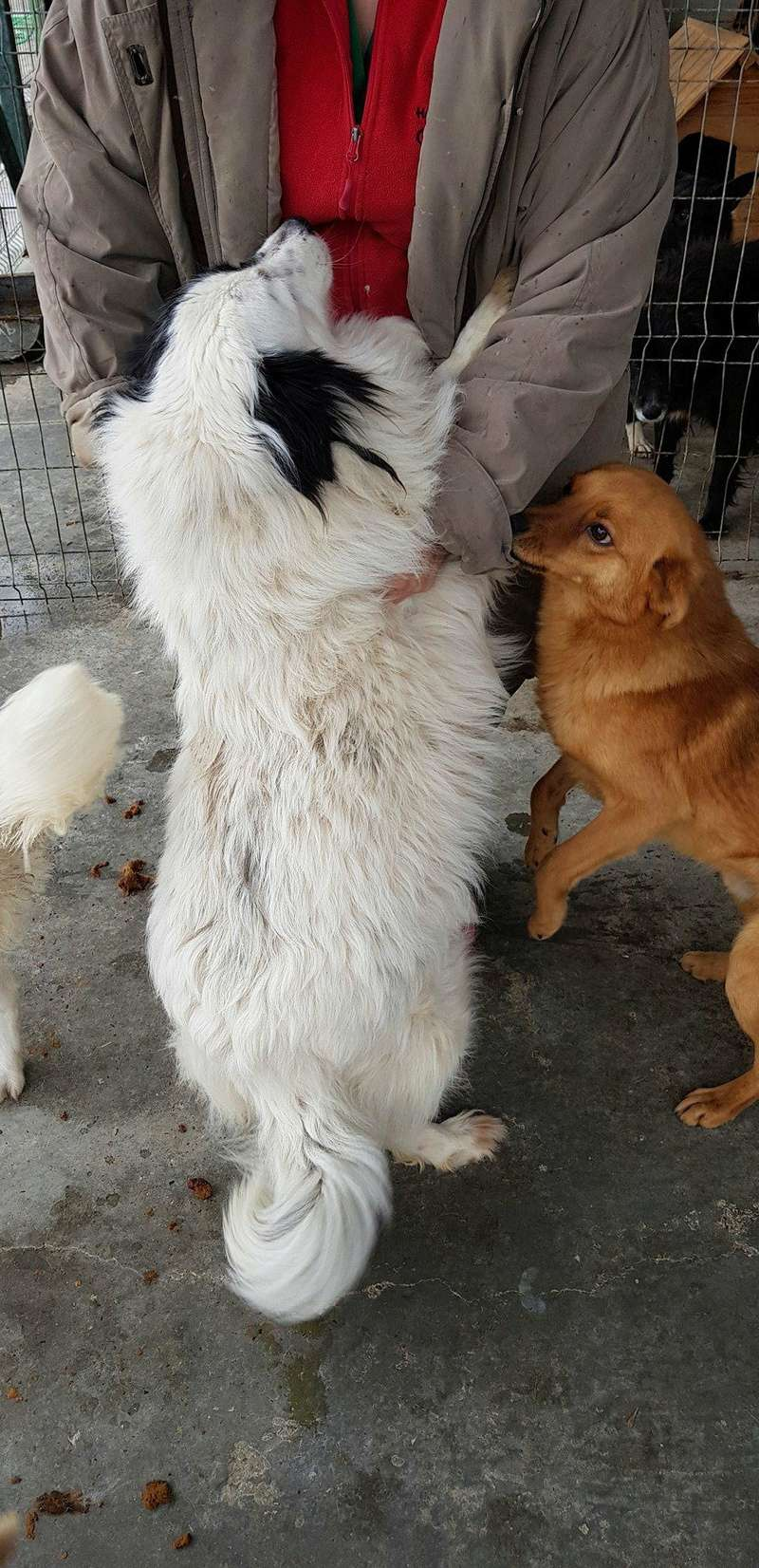 Whitney - femelle - fourrière mouroir de Iasi - adoptée via Rudy Whitne14