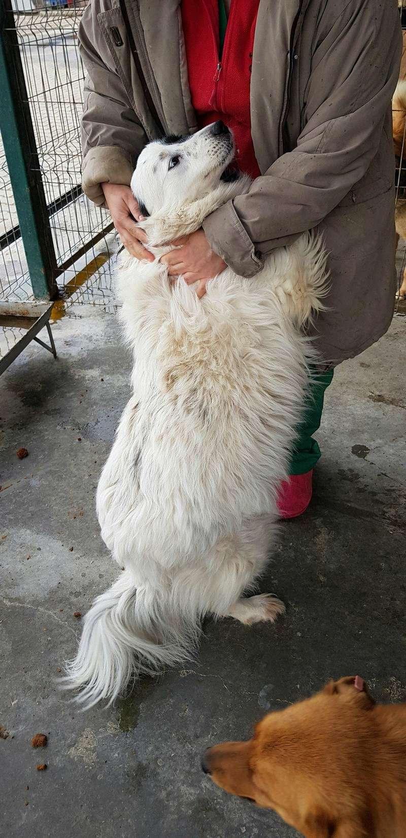 Whitney - femelle - fourrière mouroir de Iasi - adoptée via Rudy Whitne16