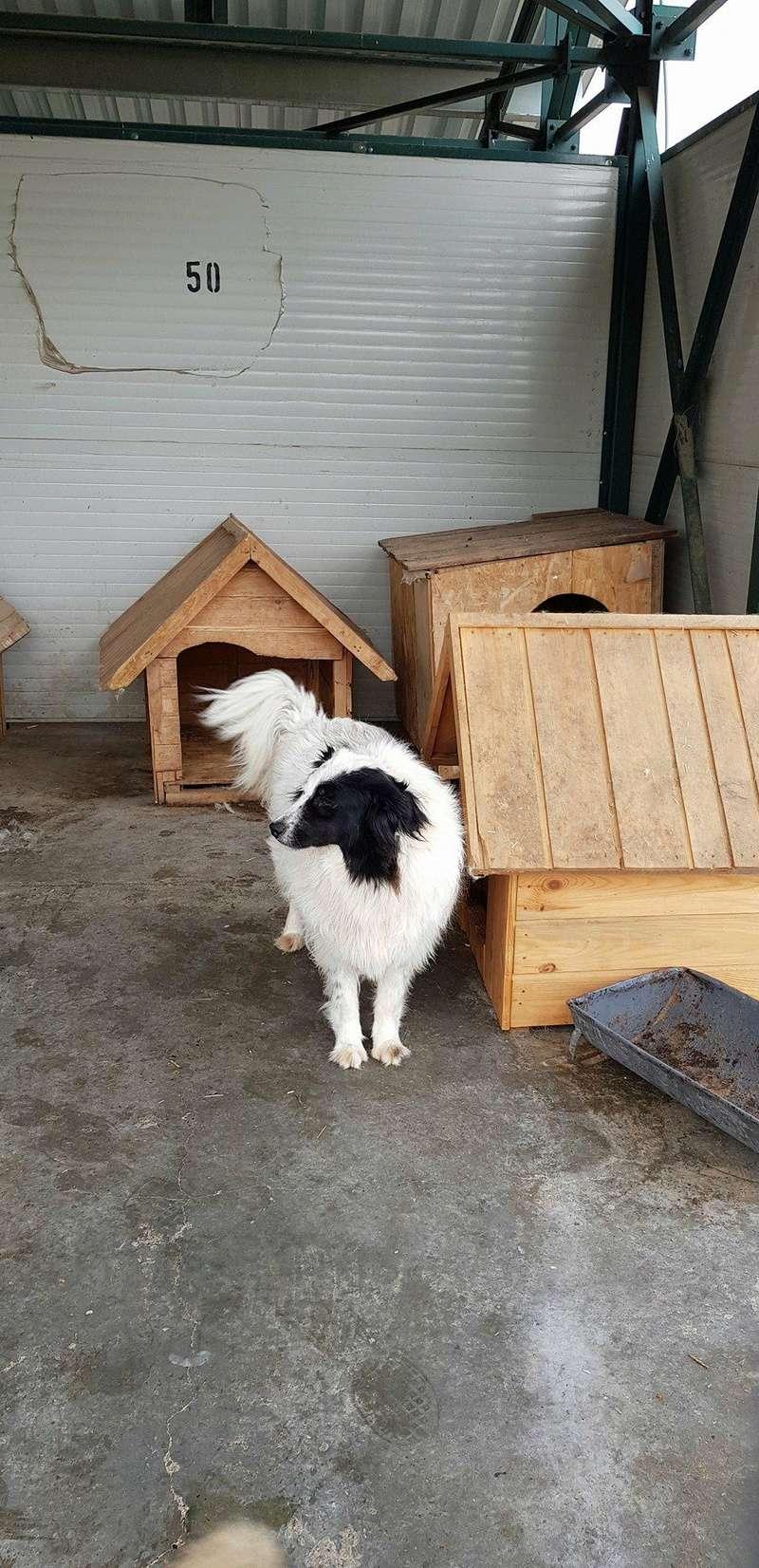 Whitney - femelle - fourrière mouroir de Iasi - adoptée via Rudy Whitne17
