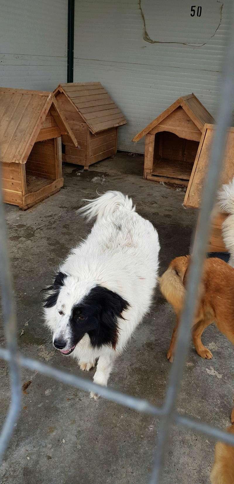 Whitney - femelle - fourrière mouroir de Iasi - adoptée via Rudy Whitne18