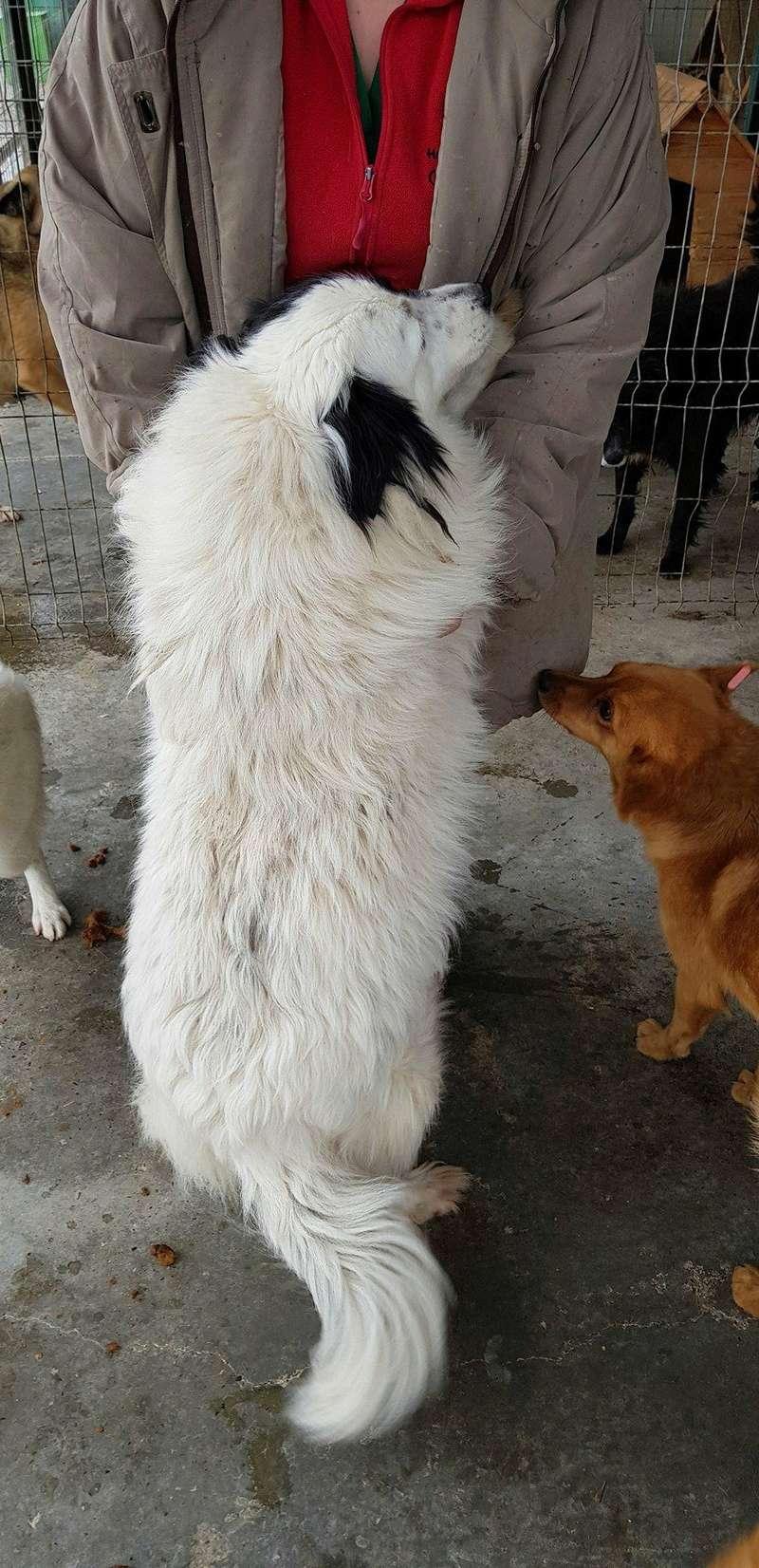 Whitney - femelle - fourrière mouroir de Iasi - adoptée via Rudy Whitne19