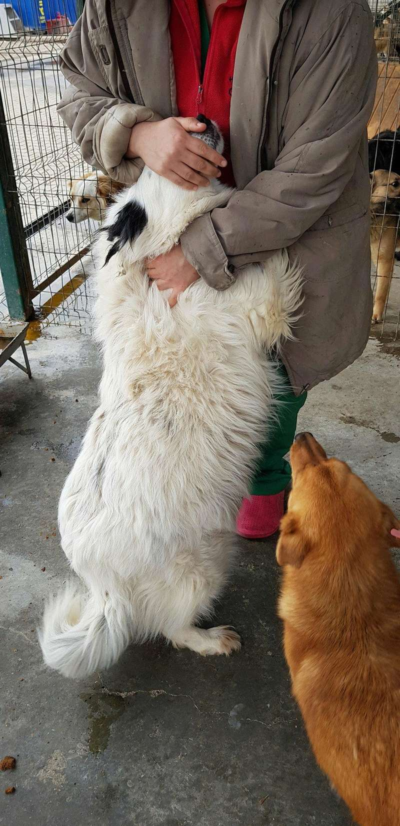 Whitney - femelle - fourrière mouroir de Iasi - adoptée via Rudy Whitne20