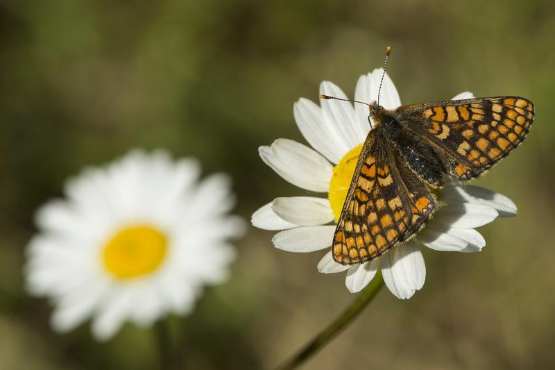 Votre avis sur le cadrage d'un papillon _000_i13