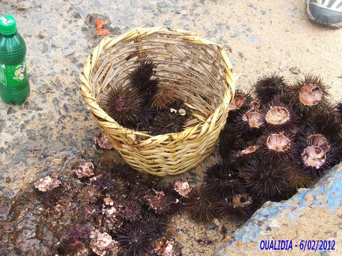 [Maroc/Pêche] Des conseils pour mon premier voyage, déguster des poissons 2_201210