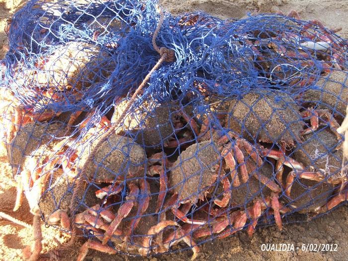 [Maroc/Pêche] Des conseils pour mon premier voyage, déguster des poissons 3_201210