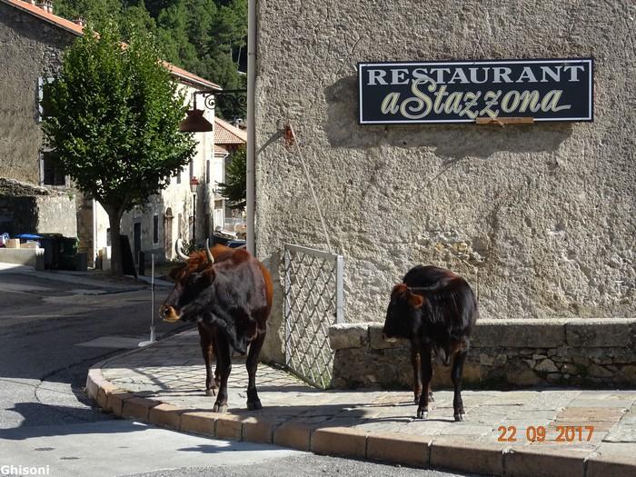 [Autres voyages/France] le tour de la Corse en voiture en 15 jours - Page 3 Dsc08320