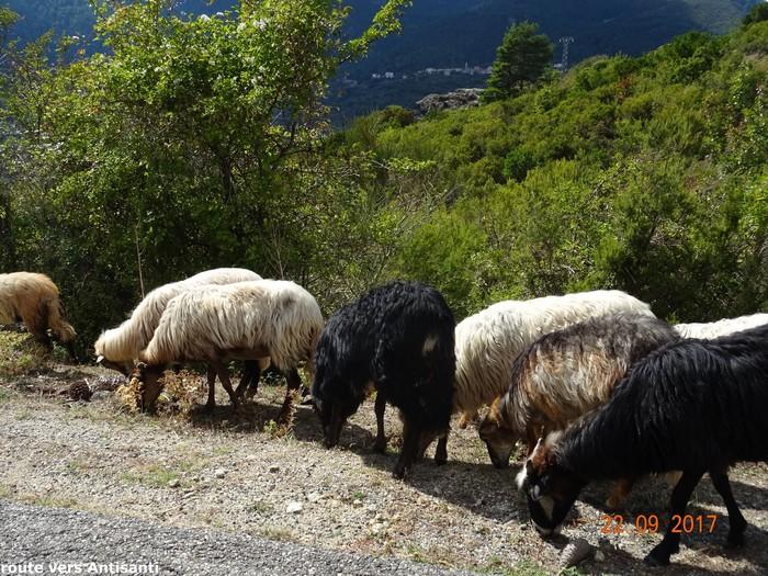 [Autres voyages/France] le tour de la Corse en voiture en 15 jours - Page 3 Dsc08412