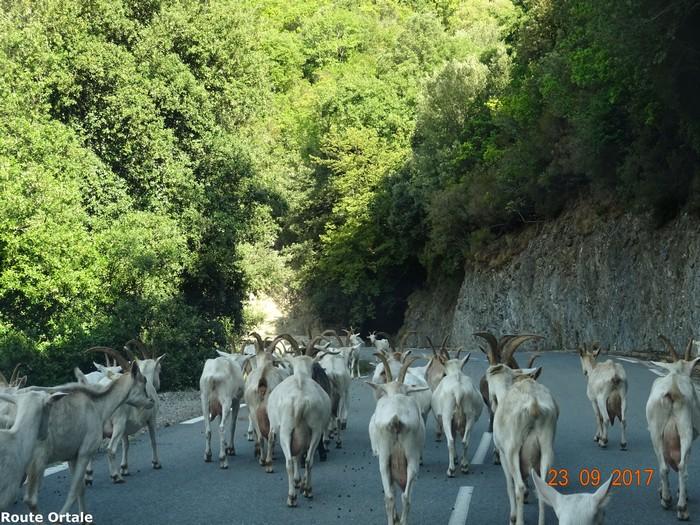 [Autres voyages/France] le tour de la Corse en voiture en 15 jours - Page 3 Dsc08513