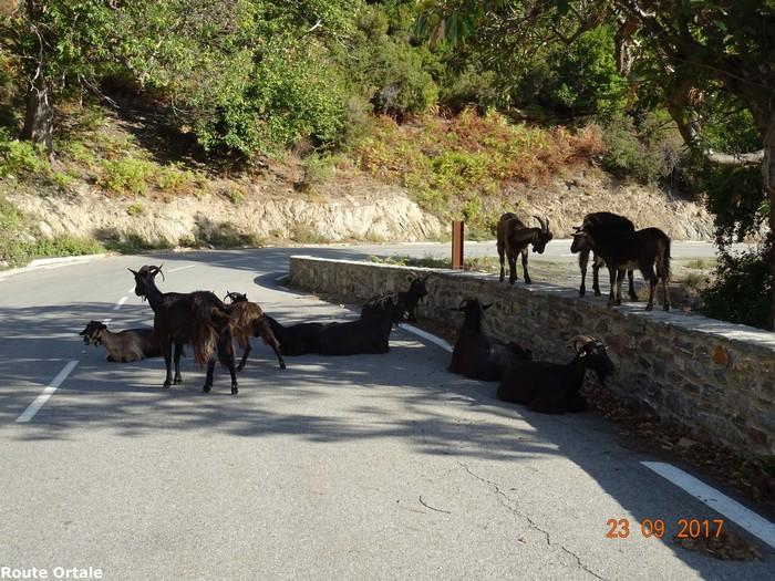 [Autres voyages/France] le tour de la Corse en voiture en 15 jours - Page 3 Dsc08514