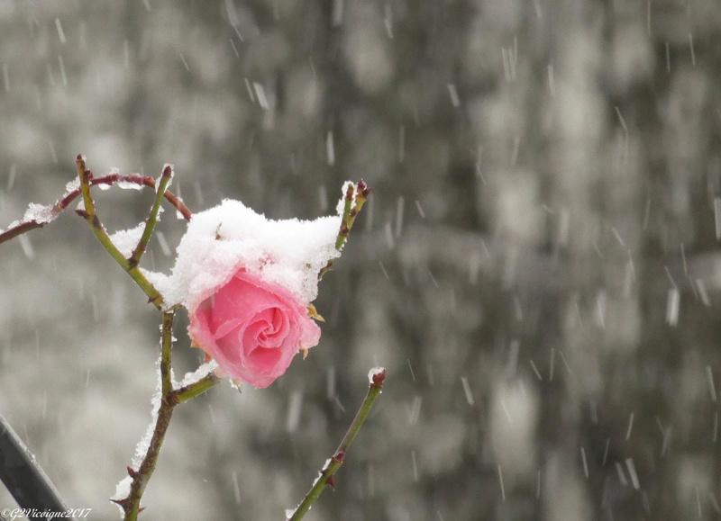 La tige de neige P1000411