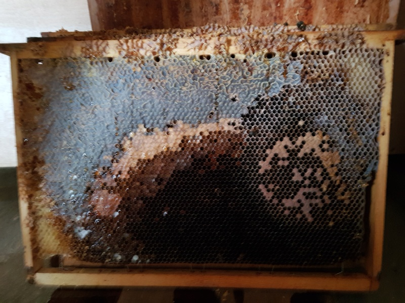 """Comment vont """"vos"""" abeilles ? 20180326"""