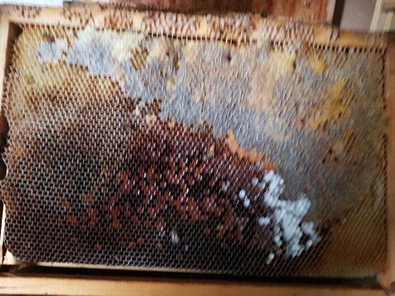 """Comment vont """"vos"""" abeilles ? 20180328"""