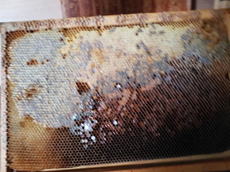 """Comment vont """"vos"""" abeilles ? 20180329"""