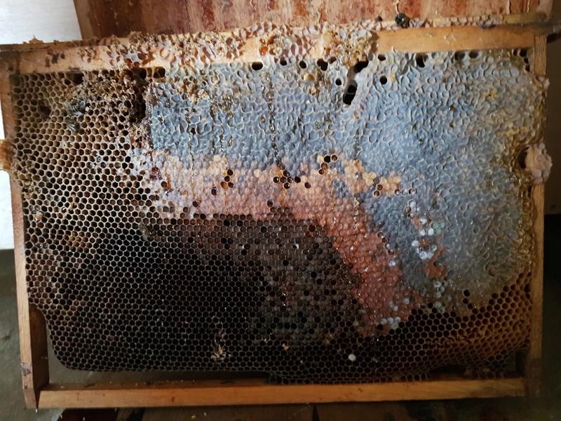 """Comment vont """"vos"""" abeilles ? 20180330"""