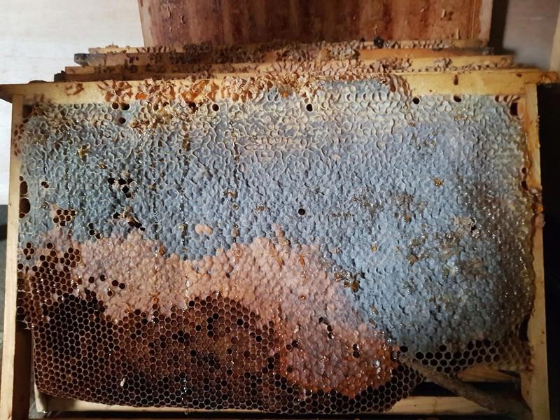 """Comment vont """"vos"""" abeilles ? 20180331"""
