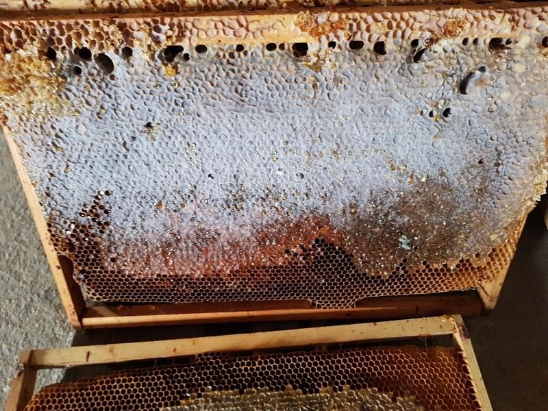 """Comment vont """"vos"""" abeilles ? 20180332"""