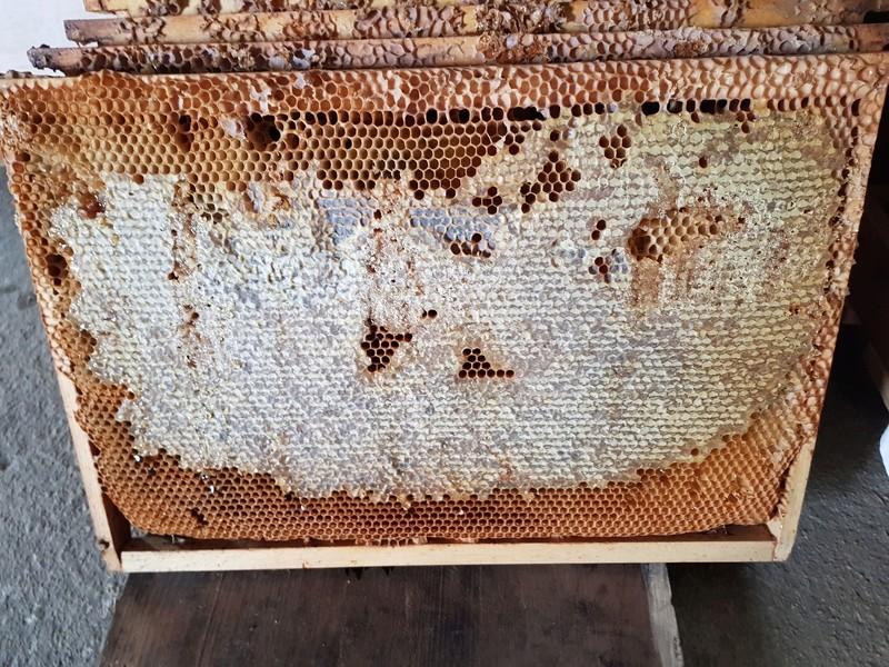 """Comment vont """"vos"""" abeilles ? 20180333"""