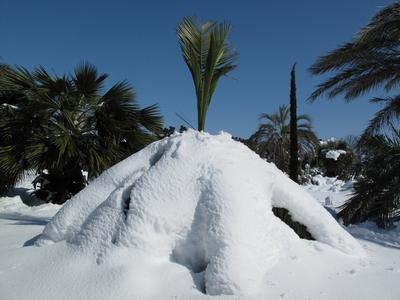 """Concours  """"L'hiver des fous jardiniers""""-Participations Feathe10"""