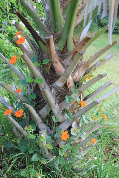 Jardin d'acclimatation privé : l'Oasis (66) - Page 24 Thunbe10